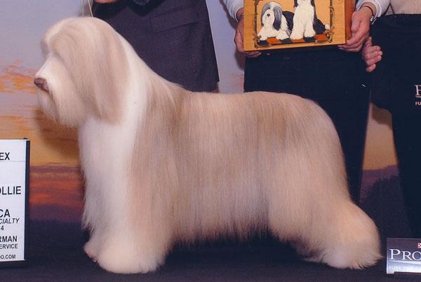 National Dog Show Winners Revealed!