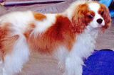 Good News: Bentley the Dog Doesn't Have Ebola