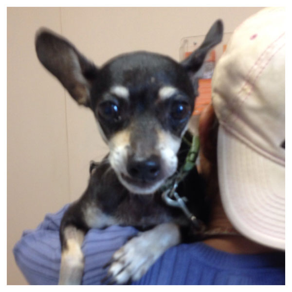 Doghouse Confessional: My Vet Staff and I Saved a Homeless Woman's Dog from Certain Death