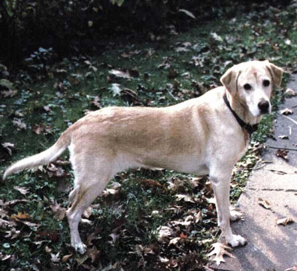 How the MuttKnee Brace Helped My Dog's Leg Injury