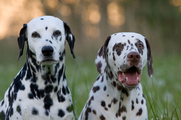 Names For Freckled Dogs