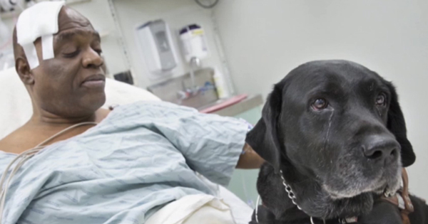 Blind Man and Guide Dog Survive Falling Onto NYC Subway Tracks