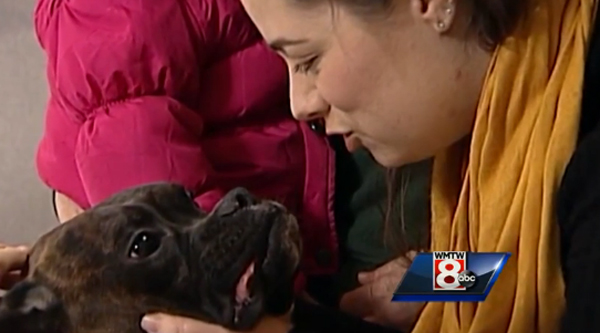 Dempsey the Boxer Survives Nine Freezing Days Outside in Maine Only to Be Hit by a Car