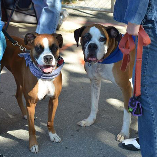 7 Ways To Pay It Forward And Help Get Dogs Adopted