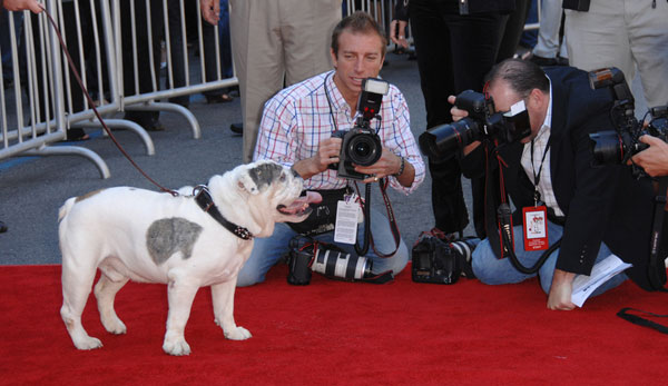 And the Oscar Nominees for Best Canine Actors Are …