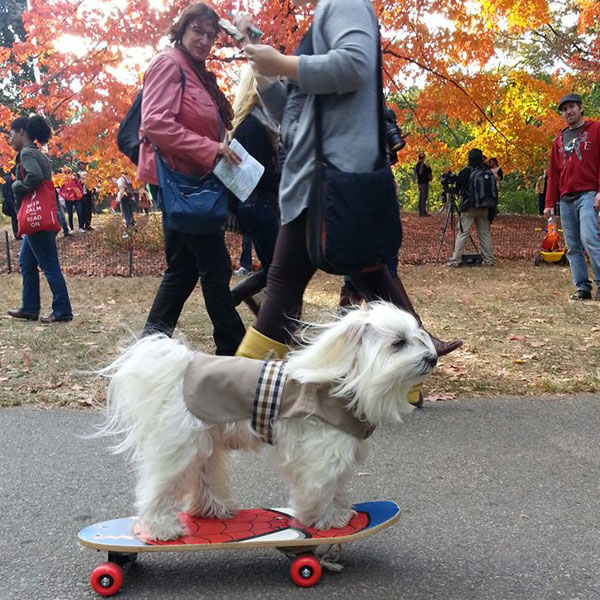 "And Now, the Story Behind the Popular ""Street Style Dogs"" Blog"
