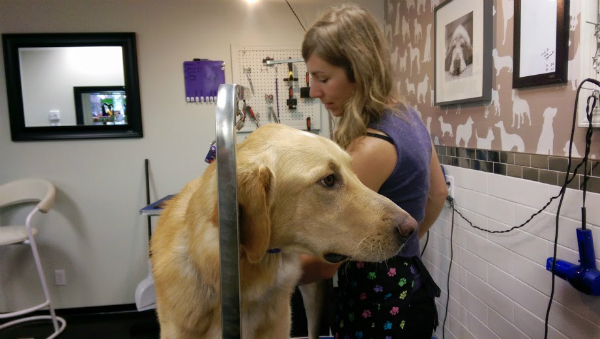 Dogster dog grooming on feedspot rss feed solutioingenieria Choice Image