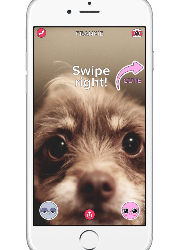 BuzzFeed Launches Cute or Not, a Tinder-Like App for Dog Photos