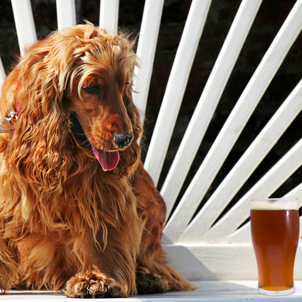 Can Dogs Drink Beer Or Other Types Of Alcohol