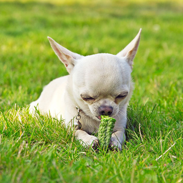 Dog Eating Leaves And Grass