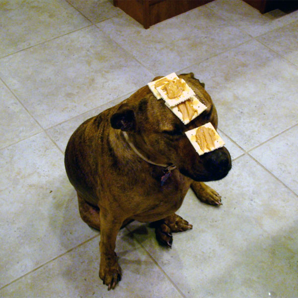 Can You Give Your Dog Too Much Peanut Butter