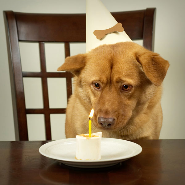 A dog with a peanut butter and banana birthday treat.
