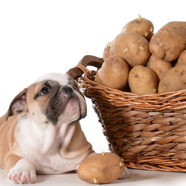 Can Dogs Eat Potatoes Safely? What About Sweet Potatoes?