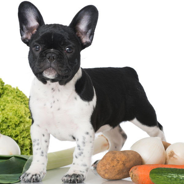 A dog posing with vegetables and potatoes.