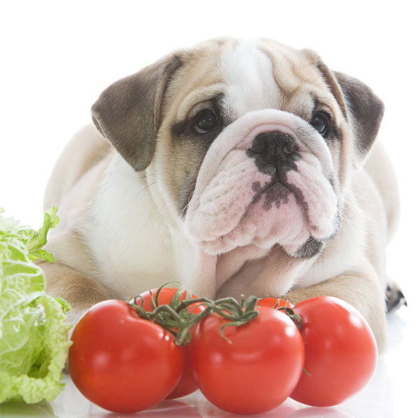 Can Dog Eat Raw Vegetables