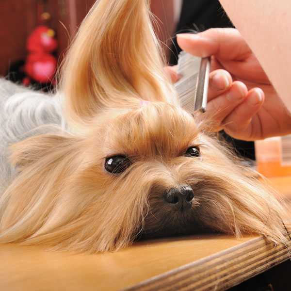 Dogs Have Lice