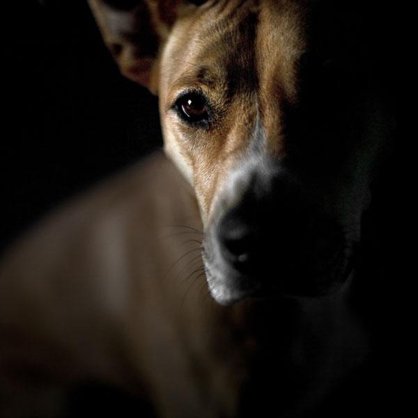 Dark Color Under Dogs Eyes