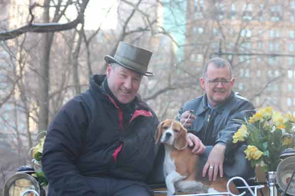 Westminster's Best in Show Beagle Rides to Support the NYC Carriage Horses