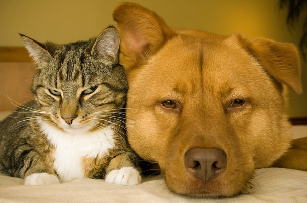 Dogs Donate Blood … to Cats!