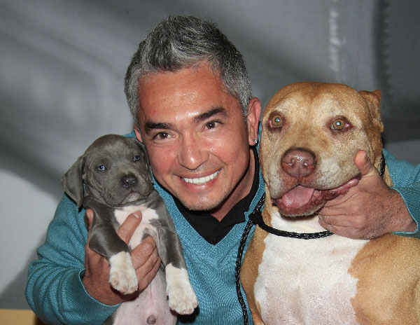 cesar millan youtube