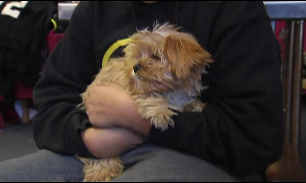 Puppy Saves Nebraska Family From House Fire