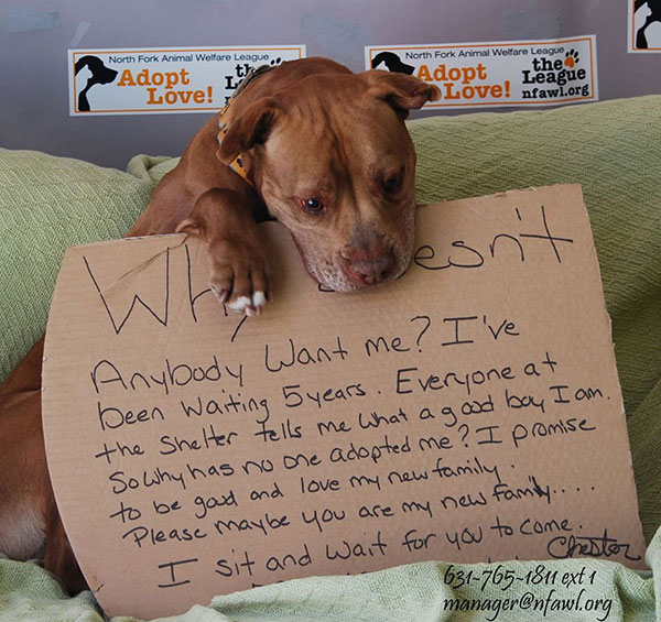 A Social Media Campaign Helps a Pit Bull Find a Home After 5 Years