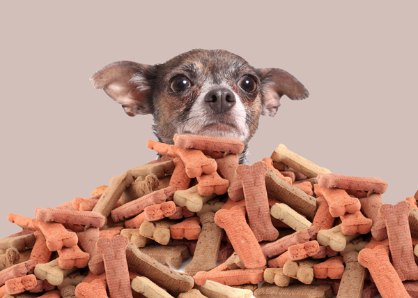 Ask A Vet What Do You Do When People Feed Your Dog Treats