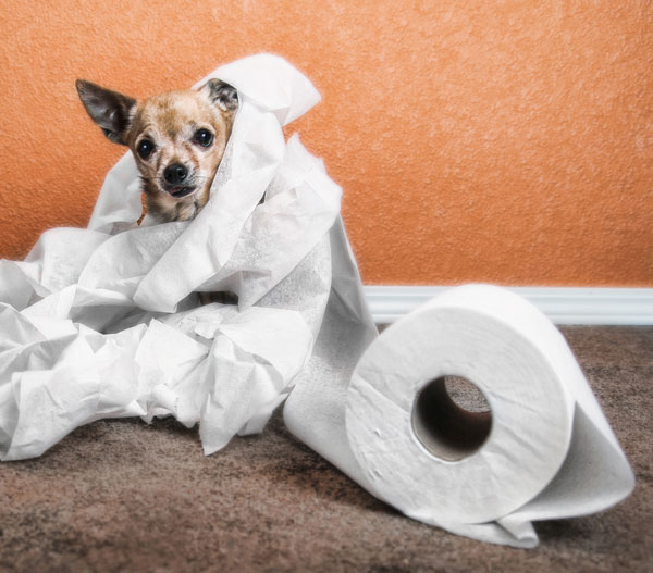 A dog standing among an unrolled toilet paper roll.