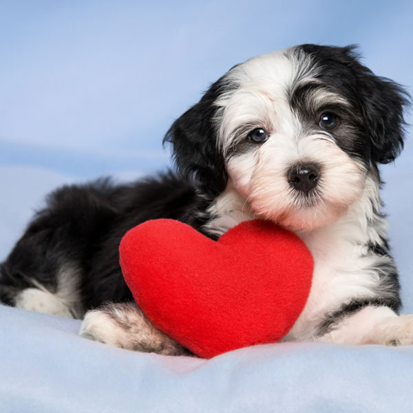Congestive Heart Failure in Dogs | VCA Animal Hospital