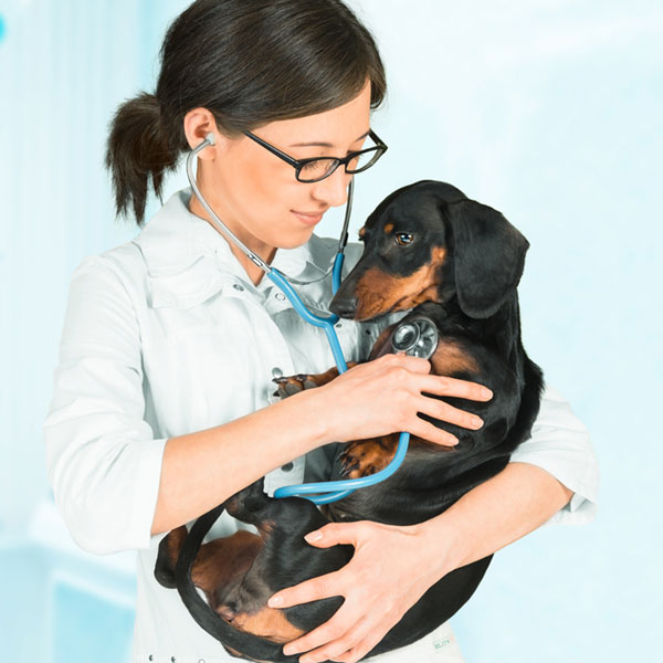 Congestive Heart Failure Diet for Dogs - Dogs Health Problems