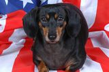 So Your Dog Wants to Become a U.S. Citizen…
