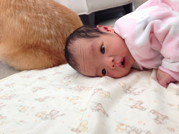 Pix We Love: Corgi Falls in Love With Newborn Baby