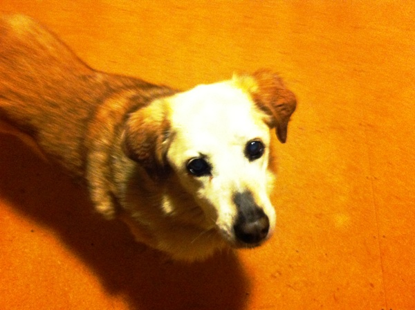 8 Things I Could Learn From My Senior Dog