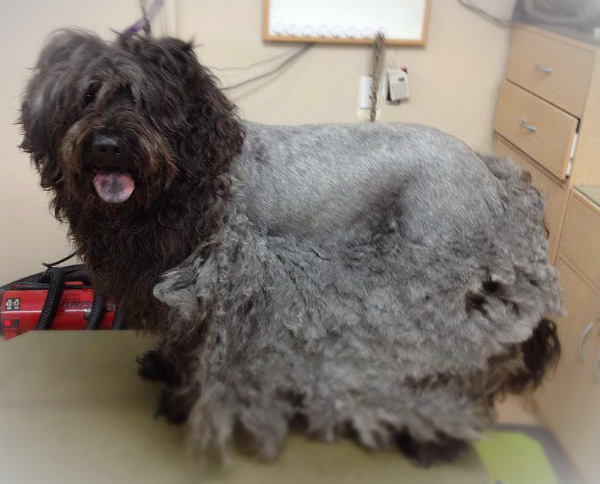 Aug 24,  · Always brush and comb a dog's long coat out before a bath, or any slightly matted hair will be worse afterward. Brush your dog weekly to prevent future mats from occurring. Brushing with a brush is okay for a superficial Views: K.