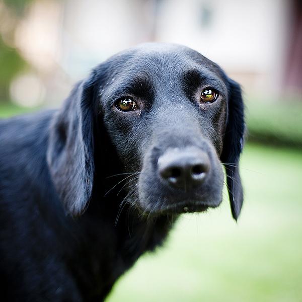 Let's Talk: Do Dogs Have Self-Esteem?