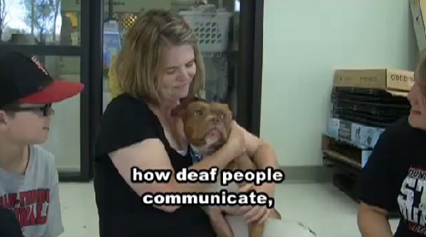 Kismet: A Deaf Lady and a Deaf Pittie Are a Perfect Match at the Shelter