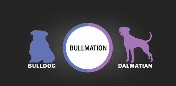 What's the Craziest Designer Dog Breed You've Ever Seen?