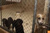 Abandonment Issues? Seriously! 50,000 Stray Dogs Roam Detroit