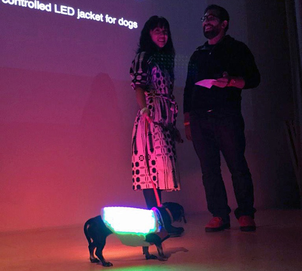 The Disco Dog Vest Turns Your Pup Into a Party Animal