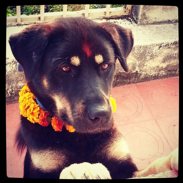 Nepali happy new year pictures funny dogs and cats