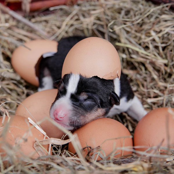 A puppy with eggshells.