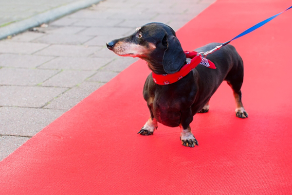 The World Dog Awards Are Coming to Hollywood