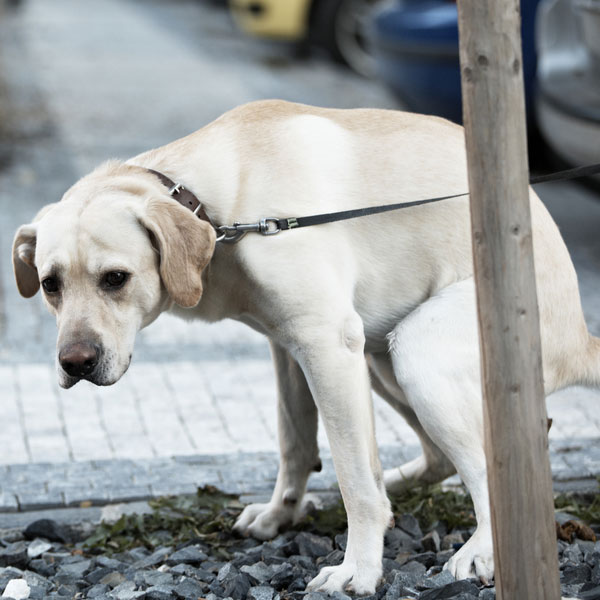 Dog Diarrhea Here S What You Need To Know