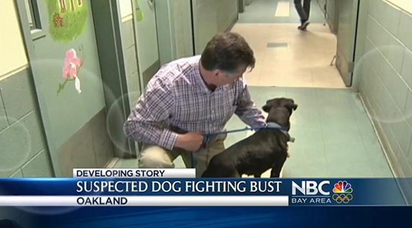 Ugh: Dog Fighting Operation Uncovered in Oakland, CA