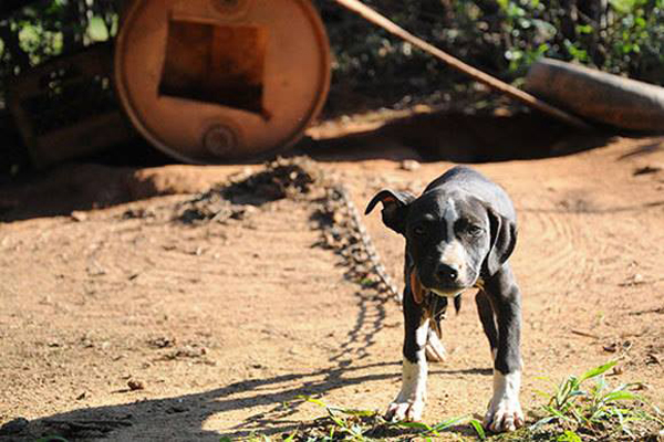 Beyond Horrific: 367 Dogs Are Rescued From Dog-Fighting Operations in 4 States