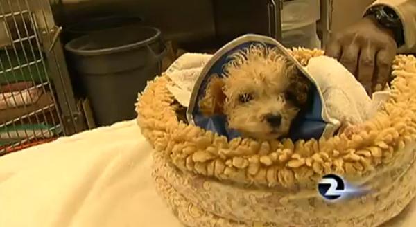 Puppy Found on Conveyor Belt at S.F. Dump