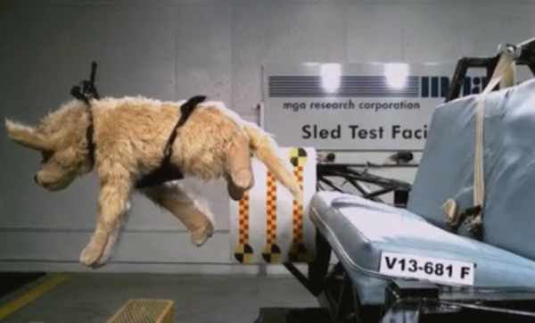 Crash Test Doggies: Dog Car Harnesses Fare Poorly in Tests