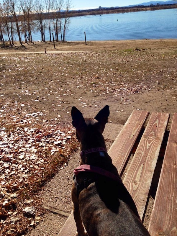 Is It Okay to Bring Fearful Dogs to the Dog Park?