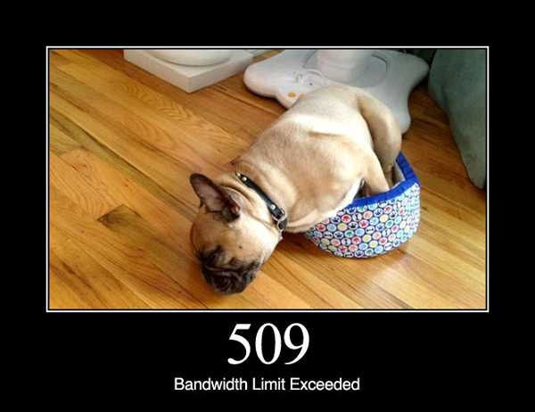 Confirmed: HTTP Status Codes Are MUCH Funnier With Dogs