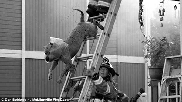 Incredible Photos: Two Dogs Escape a Burning Building